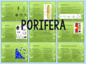 Animalia: Invertebrate Animal Phyla- PowerPoint, Graphic Organizers & Quiz