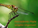 Invertebrate Phyla Graphic Organizer