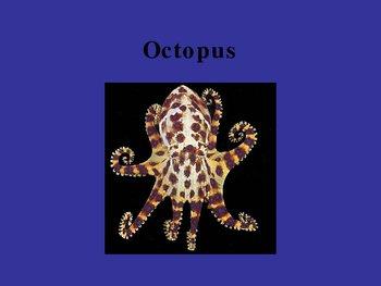 Invertebrate Powerpoint Presentation