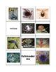 Invertebrate Sort