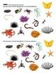 Invertebrate Unit
