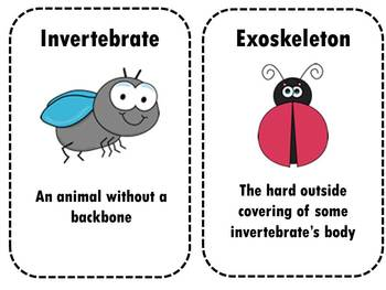 Invertebrates: A focus on Spiders, Worms, and Insects