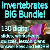 Invertebrates Animal Classification Bundle