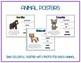 Invertebrates - Animal Research w QR Codes, Posters, Organizer - 11 Pack