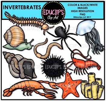 Invertebrates Clip Art Bundle {Educlips Clipart}
