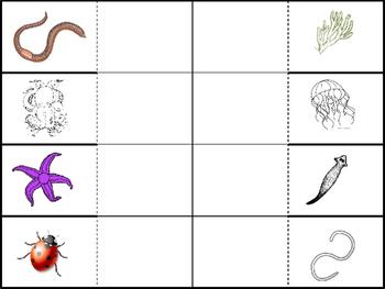 Invertebrates Foldable