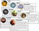 Invertebrates (8 Classes): Information Cards