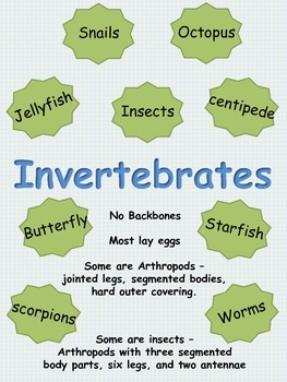 Invertebrates:  Note taking and research graphic organizer