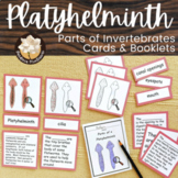 Invertebrates - Parts of Platyhelminth (Flatworm) Cards - Montessori