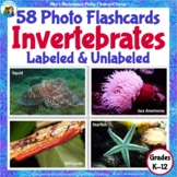 50 Animal Photo Flashcards: Invertebrates