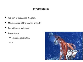 Invertebrates Power Point