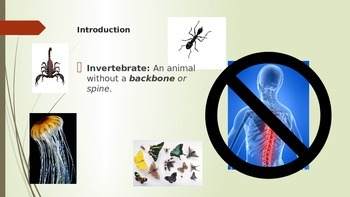 Invertebrates Powerpoint