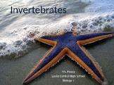 Invertebrates Powerpoint Presentation