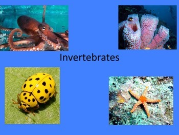 Invertebrates PowerPoint