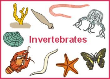 Invertebrates Step Book Project