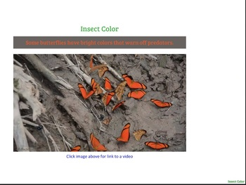 Invertebrates! Tarantulas, Crabs, Butterflies, and More (PDF)