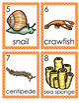 Invertebrates Write the Room