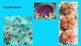 Invertebrates and Their Groups