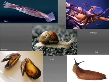 Invertebrates - power point