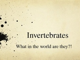 Invertebrates:What in the world are they?!