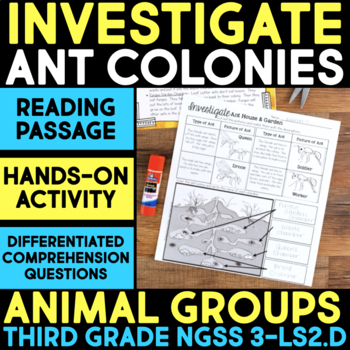 Investigate - Ant Colonies - Ecosystems: Animal Group Behavior & Interactions