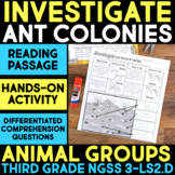 INVESTIGATE Ant Colonies - Ecosystems: Animal Group Behavior & Interactions