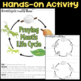 Investigate Ant Life Cycle vs. Praying Mantis Life Cycle - Science Station