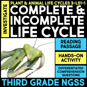 Investigate Ant Life Cycle vs. Praying Mantis Life Cycle -