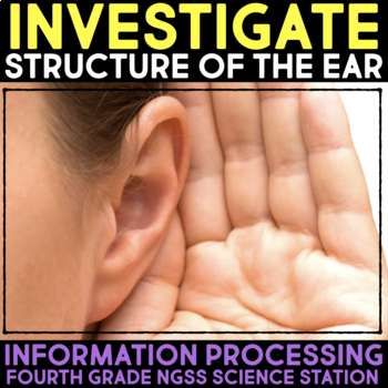 Investigate the Structure of the Ear - Information Processing