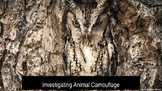 Investigating Animal Camouflage Powerpoint Presentation