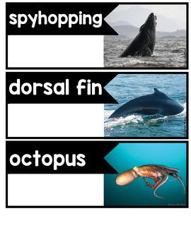 Informational Writing Arctic Animals