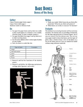 Skeletal System studies—3 activities using real (chicken) bones—writing prompts