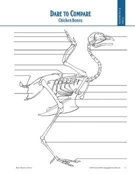 Skeletal System studies—3 activities using real (chicken) bones—writing prompts