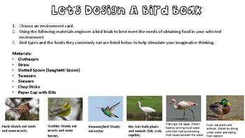 Investigating & Engineering Bird Beaks (Animal Adaptations, Survival, K-8 STEM)