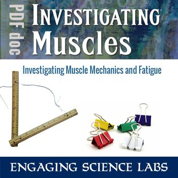 Investigating Muscles—2 Experiments on Muscle Fatigue and
