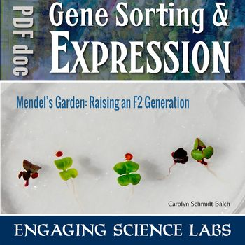 Investigating Plant Genetics—Raising and crossing generations of Fast Plants®