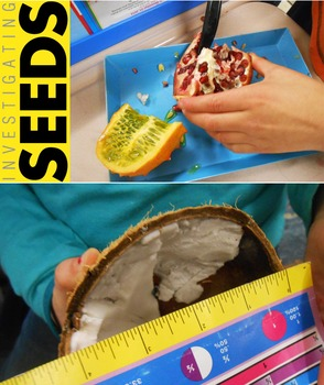 Investigating Seeds / Seed Dispersal