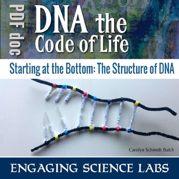 Investigating the DNA Molecule, its structure and replication