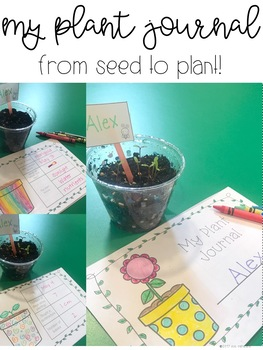 Investigating the Needs of Plants {Aligns with NGSS 2-LS2-1} {science}