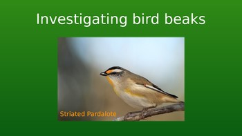 Investigations bird beaks part 1 powerpoint