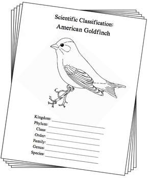 Iowa State Bird Notebooking Set (American Goldfinch)