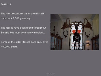 Irish Elk - Extinct - Power Point - Information History Facts Pictures