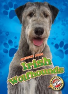 Irish Wolfhounds