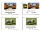 Irregular Plural Nouns Photo Cards