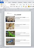 Is It A Mammal? worksheet