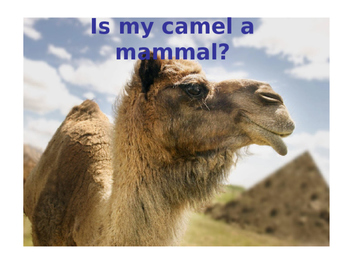 Is My Camel a Mammal?