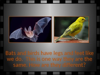 Is a Bat a Bird?  a Science PPT for Young Learners (PreK-1st gr)