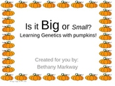 Is it Big or Small? Learning Genetics with Pumpkins PowerPoint