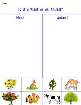 Is it Plant or an Animal? Grade school worksheet