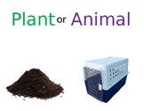 Is it a plant or an animal?